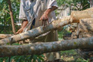 Siliguri 'corridor' for timber smuggling
